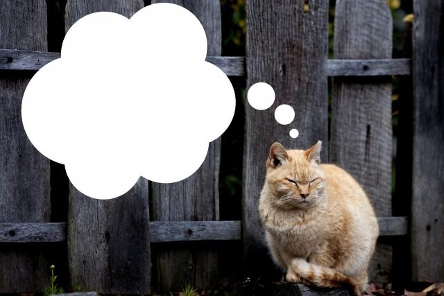 考える猫|アフィリエイトの水先案内